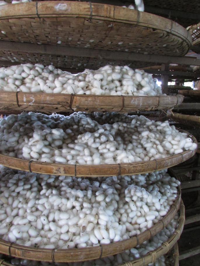 Dalat_Silk Worm Cocoons Drying